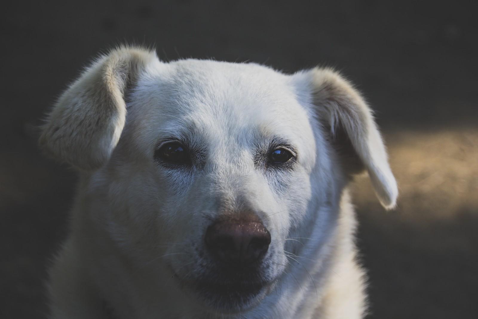 アップで見つめる犬