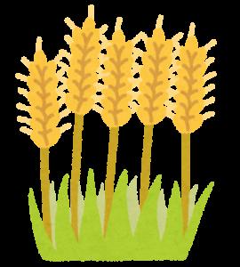 小麦イラスト