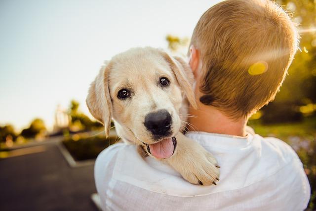 抱っこされた犬