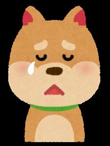 涙を流す犬