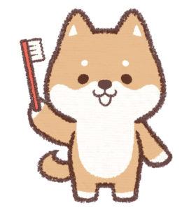 歯ブラシを持つ犬